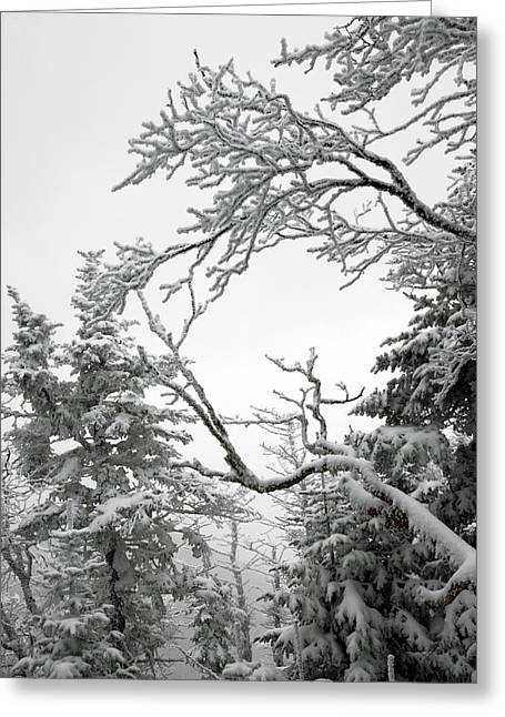 Icy Branches In The Adirondack Mountains Of New York Greeting Card by Brendan Reals