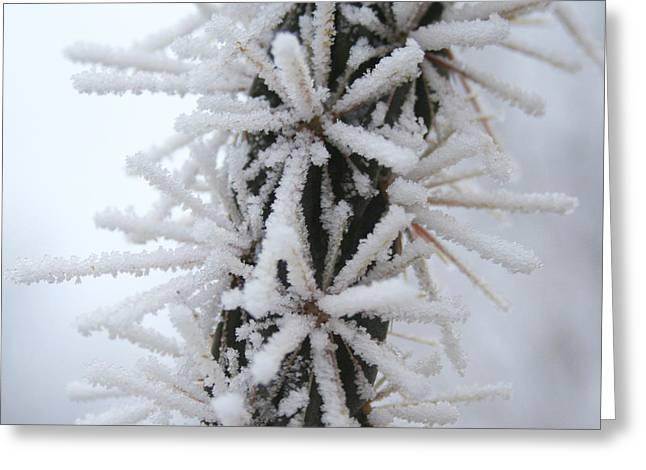 Icy Cactus Greeting Card