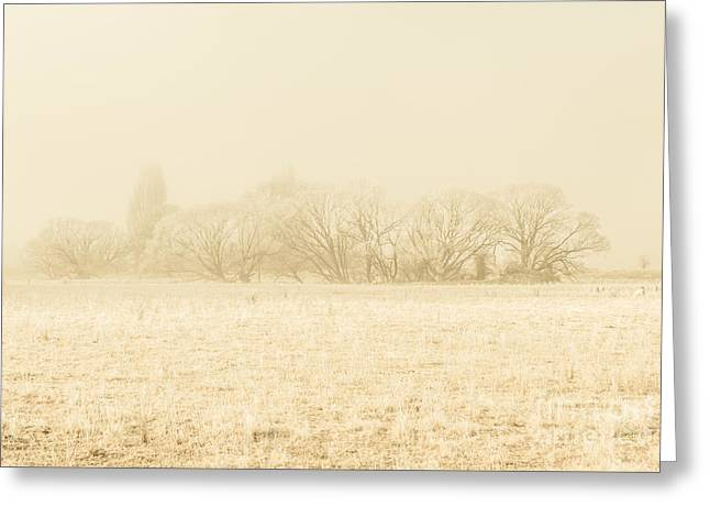 Icy Cold Foggy Woodland Greeting Card