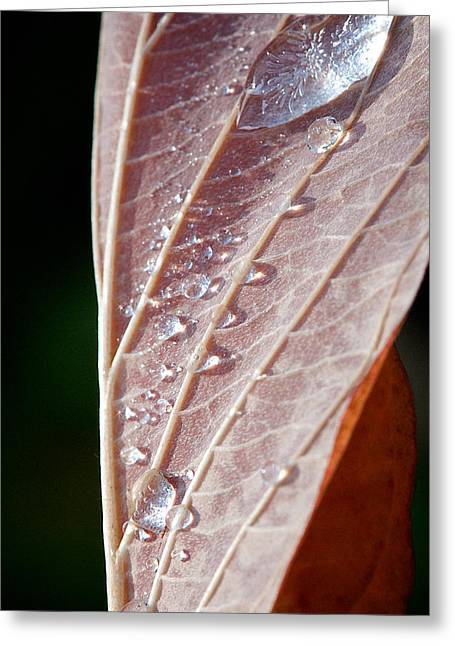 Icy Fall Morning Greeting Card by Lisa Knechtel