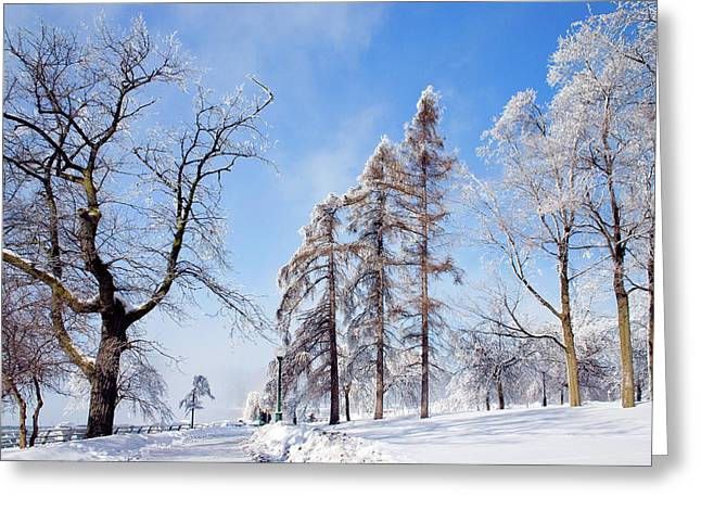 Icy Frosting Greeting Card by Timothy McIntyre