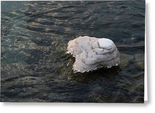 Icy Island - Drifting Solo On Silky Grays Greeting Card