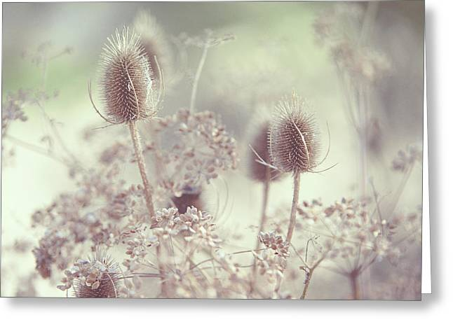Icy Morning. Wild Grass Greeting Card by Jenny Rainbow