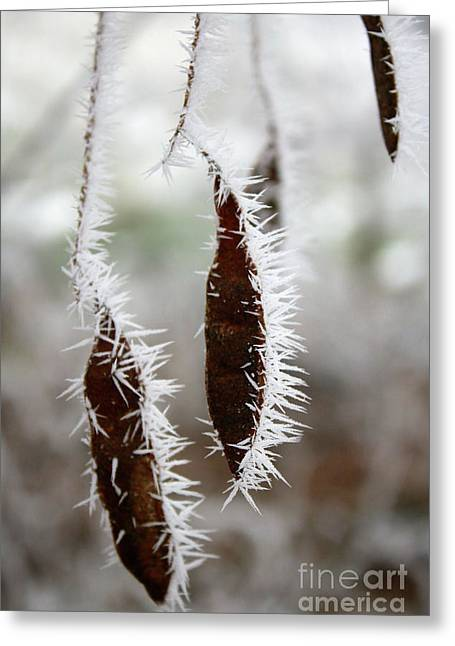 Icy Seed Pods Greeting Card