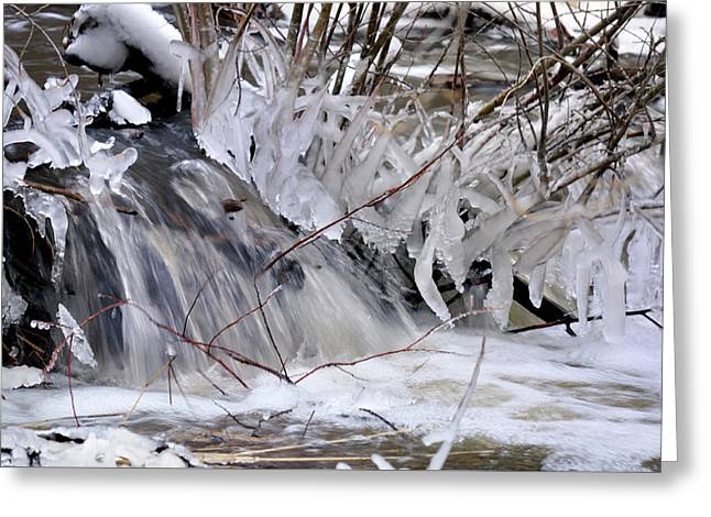 Icy Spring Greeting Card
