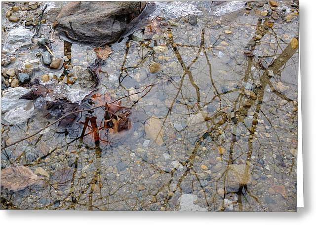 Icy Stream Greeting Card by Scott Kingery