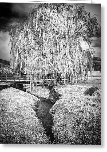 Icy Tree In The Meadow Black And White Greeting Card