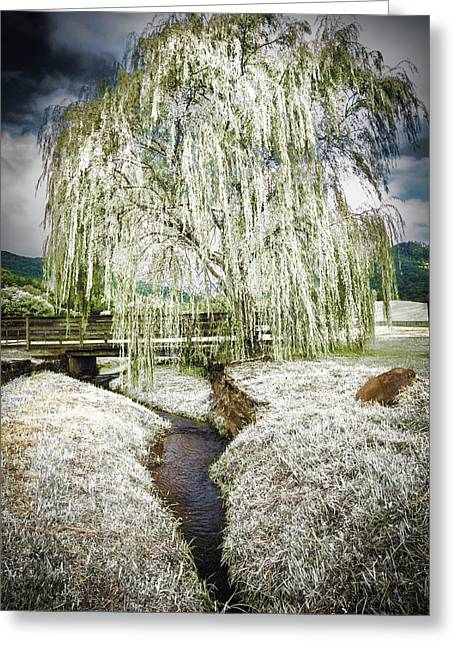 Icy Tree In The Meadow Greeting Card by Debra and Dave Vanderlaan