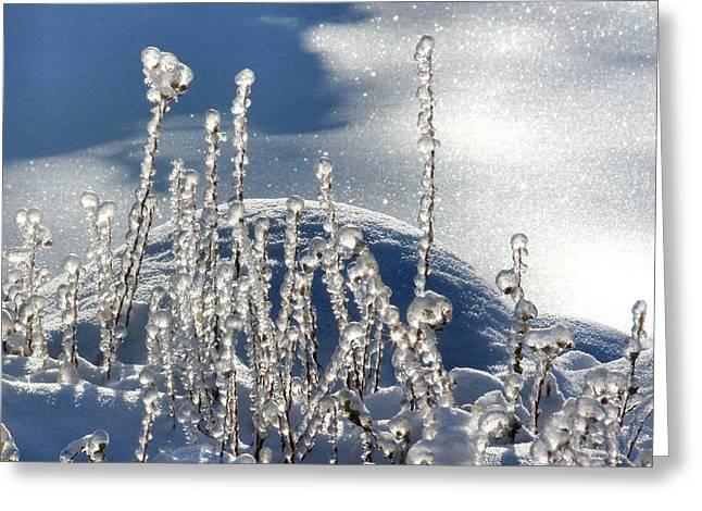 Greeting Card featuring the photograph Icy World by Doris Potter