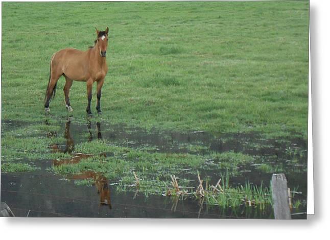 Idaho Farm Horse1 Greeting Card by Cynthia Powell