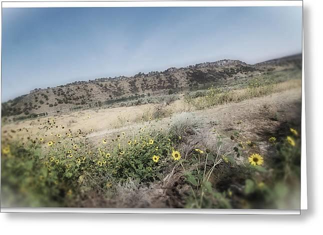 Idaho Wildflowers Greeting Card by Bonnie Bruno