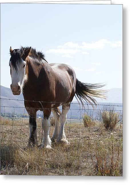 Idaho Work Horse 2 Greeting Card by Cynthia Powell