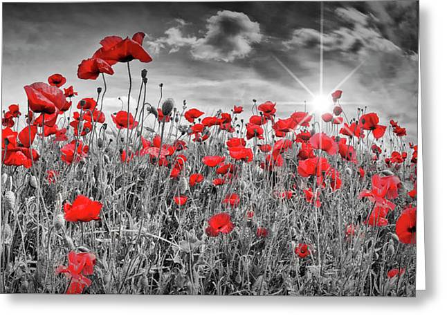 Idyllic Field Of Poppies With Sun Greeting Card