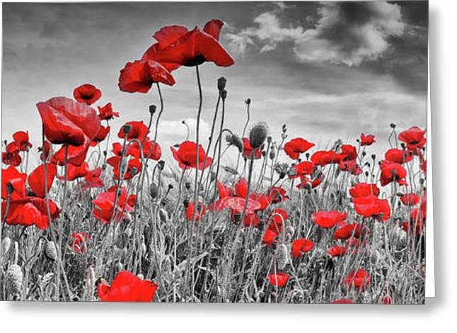 Idyllic Field Of Poppies With Sun - Panorama Greeting Card