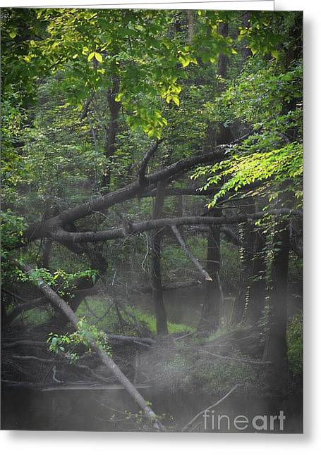 Greeting Card featuring the photograph If A Tree Falls In The Woods by Skip Willits