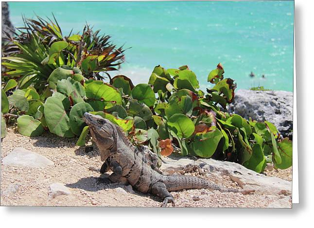 Iguana At Tulum Greeting Card by Roupen  Baker