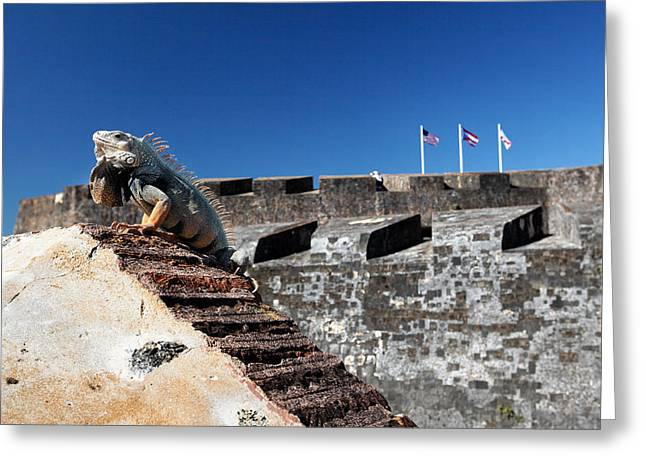 Iguana Basking On The Wall Of The San Cristobal Fort San Juan Puerto Rico. Greeting Card by George Oze