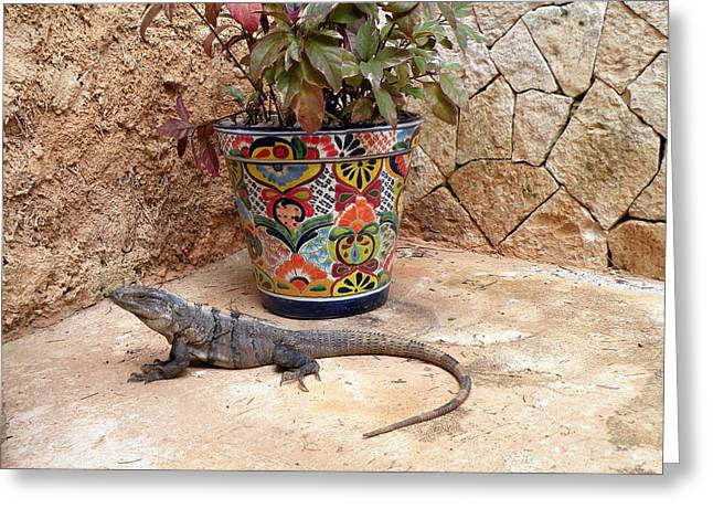 Greeting Card featuring the photograph Iguana by Dianne Levy
