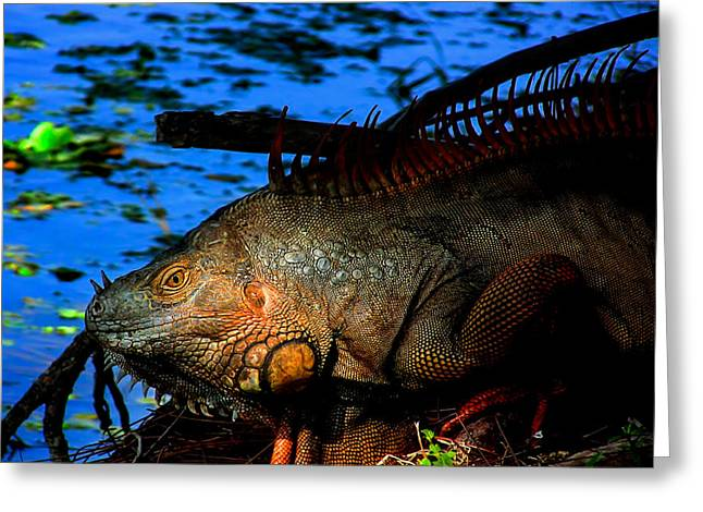 Iguana Sunrise Greeting Card by Mark Andrew Thomas
