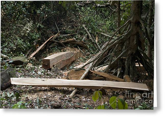 Illegal Logging Greeting Card by Andrew Routh