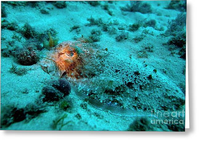 Illuminated Eye Of A Common Cuttlefish Greeting Card by Sami Sarkis