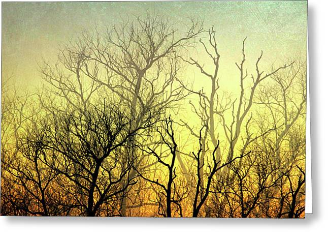 Illuminated Forest Greeting Card