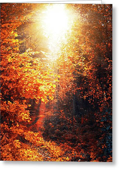 Illuminated Forest Greeting Card by Wim Lanclus