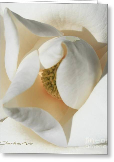 Illuminated Magnolia Macro Greeting Card
