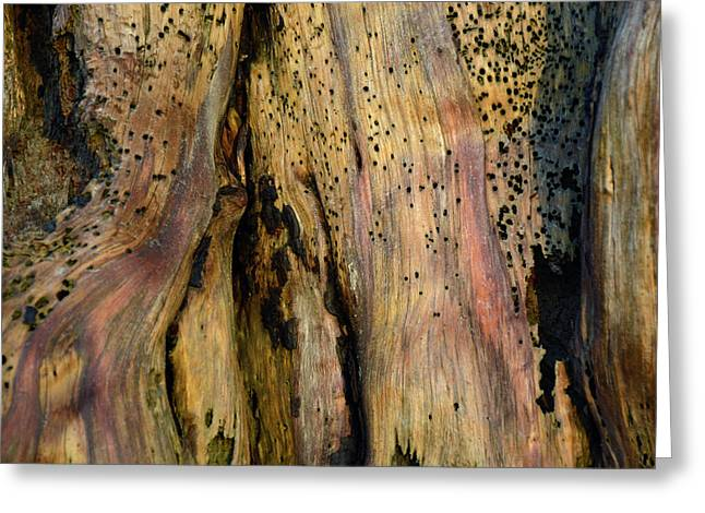 Illuminated Stump 02 Greeting Card by Bruce Gourley