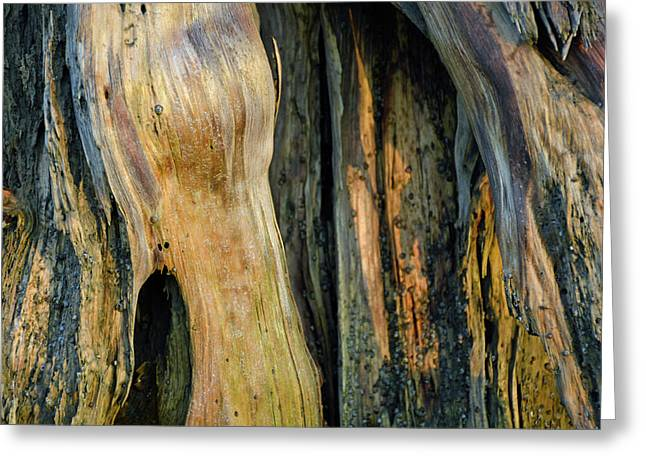 Illuminated Stump 03 Greeting Card by Bruce Gourley