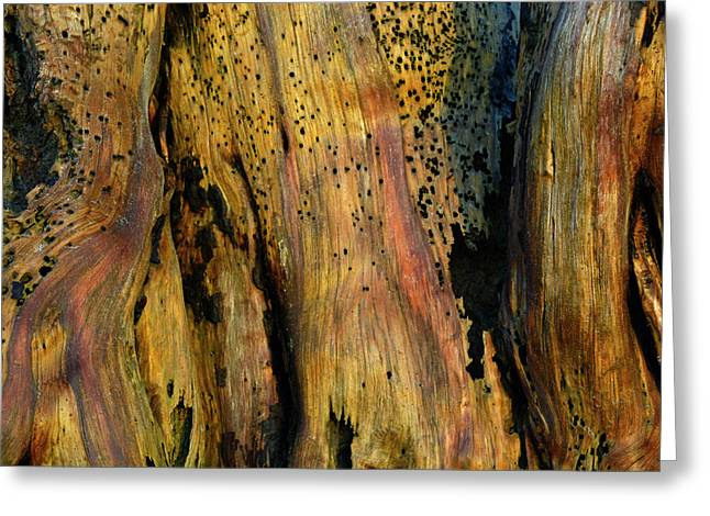 Illuminated Stump Greeting Card by Bruce Gourley