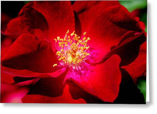 Intrigue Greeting Cards - Illumination Greeting Card by Frozen in Time Fine Art Photography