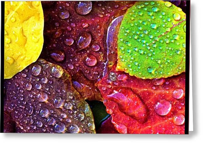 Illuminous Colour Greeting Card by Sheila Mcdonald