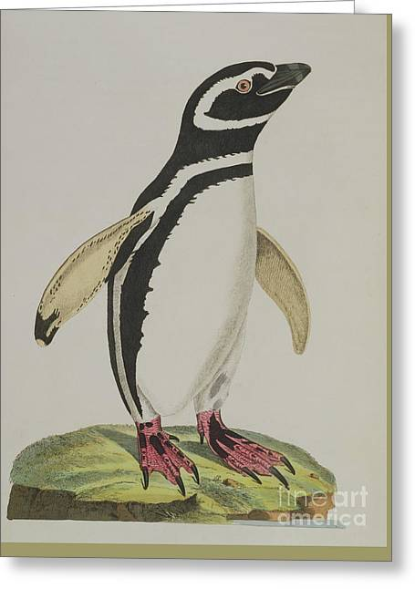 Illustration Of A Penguin Greeting Card
