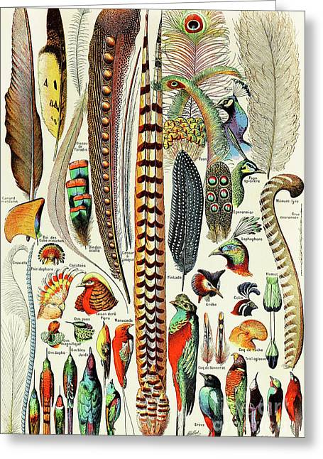 Illustration Of Feathers And Birds  Greeting Card