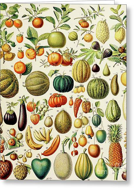 Illustration Of Fruit Greeting Card by Adolphe Philippe Millot