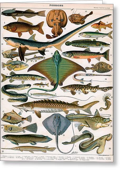 Illustration Of Ocean Fish Greeting Card by Alillot