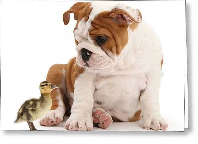 I'm A Quack Of All Trades Greeting Card