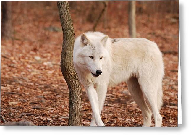 I'm A Wolf Greeting Card