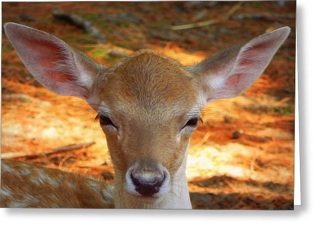 I'm All Ears Greeting Card by Karen Cook