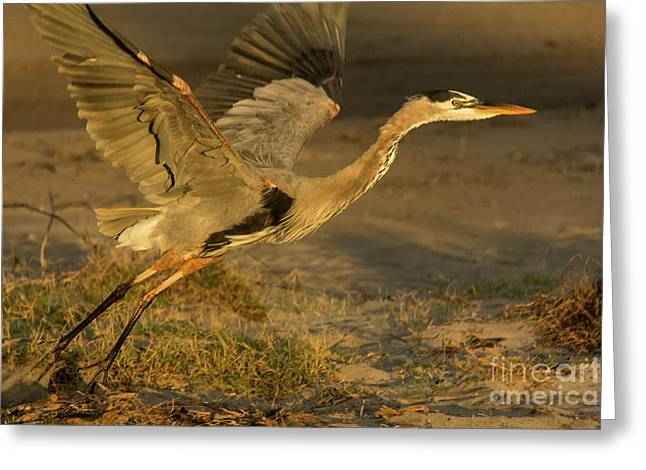 I'm Out Of Here Wildlife Art By Kaylyn Franks Greeting Card