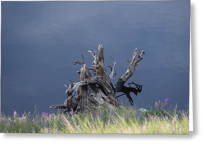 Stump Chambers Lake Hwy 14 Co Greeting Card