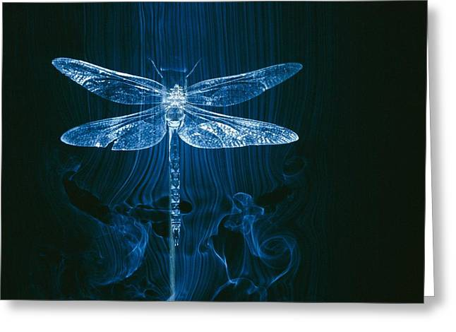 Imagery Of A Dragonfly In A Wind Tunnel Greeting Card