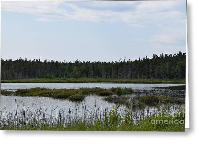 Images From Mt. Desert Island Maine 1 Greeting Card