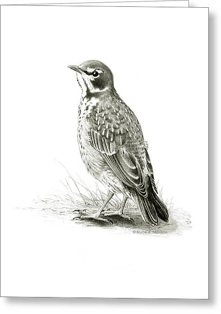 Immature American Robin Greeting Card