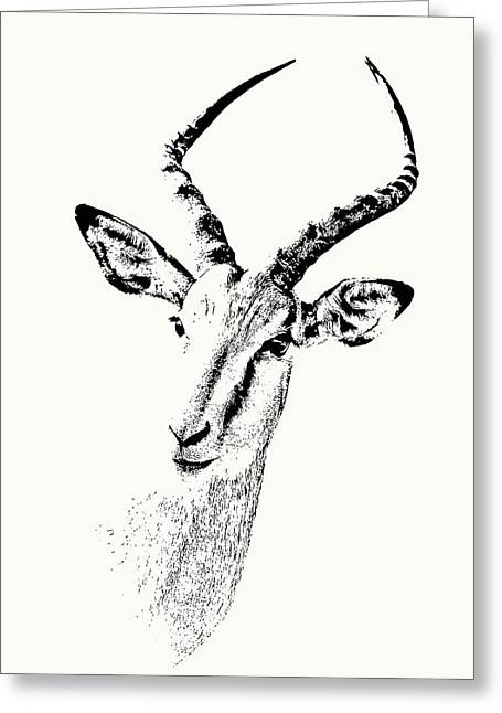 Impala Antelope Portrait Greeting Card