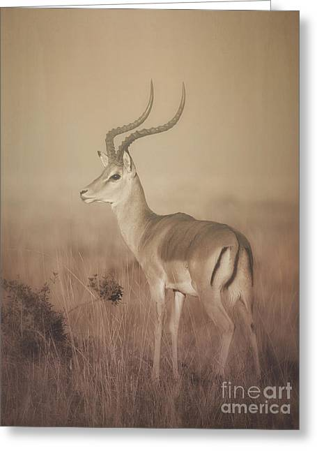 Greeting Card featuring the photograph Impala At Dawn by Chris Scroggins