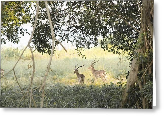 Impala Greeting Card by Patrick Kain