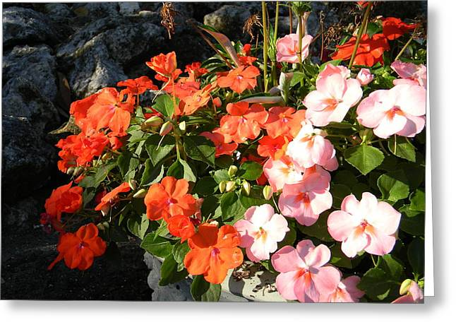 Impatient For Impatiens Greeting Card by Warren Thompson