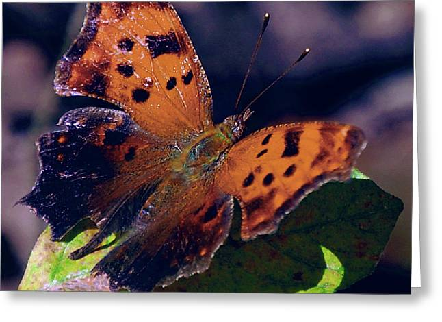 Reds Gold Greens White Blues Greeting Cards - Imperfect Satyr Comma Greeting Card by DigiArt Diaries by Vicky B Fuller